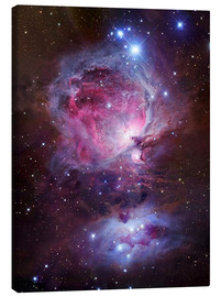 Canvas print  The Orion Nebula - Robert Gendler