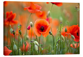 Canvas print  Poppies 21 - Nailia Schwarz