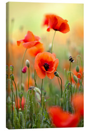 Canvas  Poppies 22 - Nailia Schwarz