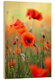 Wood print  Poppies - Nailia Schwarz