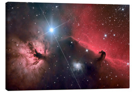 Canvas  The Horsehead Nebula - Roth Ritter