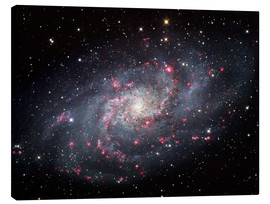 Canvas print  The Triangulum Galaxy - Robert Gendler