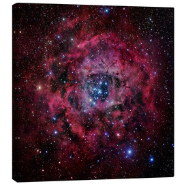 Canvas print  The Rosette Nebula - Robert Gendler