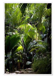 Premium poster Jungle path