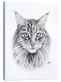 Canvas print  Maine Coon Cat - Christian Klute