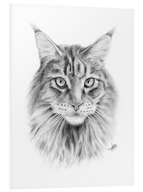 Forex  Maine Coon Cat - Christian Klute