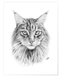 Premium poster  Maine Coon Cat - Christian Klute
