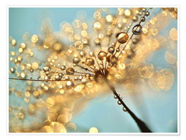 Premium poster Dandelion umbrellas with gold drops