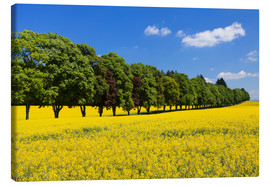 Canvas print  Tree Alley in a rape field, Swabian Alb - Markus Lange