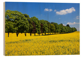 Wood  Tree Alley in a rape field, Swabian Alb - Markus Lange