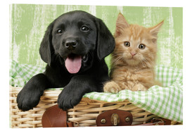 Acrylic print  Puppy and kitten in green gingham - Greg Cuddiford