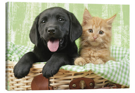 Canvas print  Puppy and kitten in green gingham - Greg Cuddiford