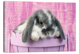 Canvas  Rabbit in a flower pot - Greg Cuddiford