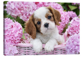Canvas print  Pup in Pink Flowers - Greg Cuddiford