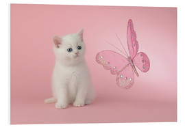 Forex  Kitten with Pink Butterfly - Greg Cuddiford