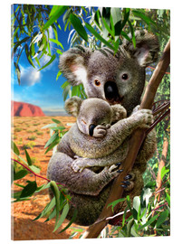 Acrylic print  Koala and cub - Adrian Chesterman