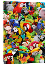 Acrylic print  Parrot Heads - Lewis T. Johnson