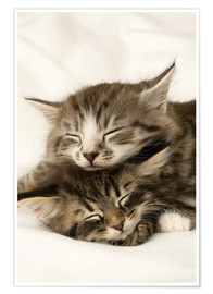 Poster Two cats sleeping