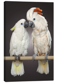 Canvas  Cockatoo love - Greg Cuddiford