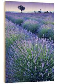Wood  Lavender Field - Simon Kayne