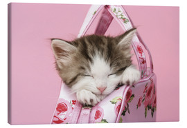 Canvas print  Sleeping kitten in pink handbag - Greg Cuddiford