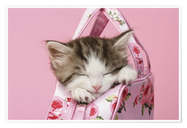 Poster  Sleeping kitten in pink handbag - Greg Cuddiford