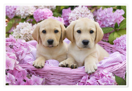Premium poster Labrador puppies in a basket