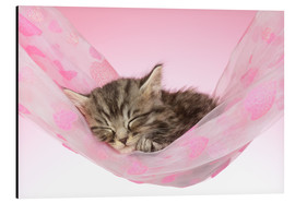 Alu-Dibond  Sleeping Kitten Hammock - Greg Cuddiford