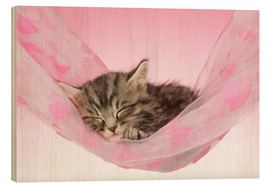 Wood print  Sleeping Kitten Hammock - Greg Cuddiford