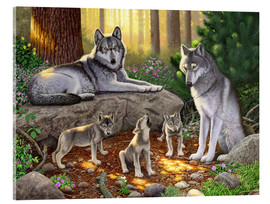 Acrylic print  A family of wolves - Chris Hiett