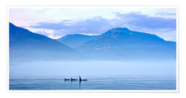 Premium poster Three Killer whales in mountain landscape at Vancouver Island