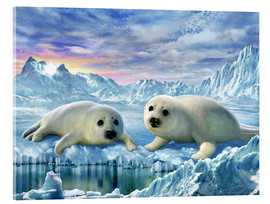 Acrylic print  Seal pups - Adrian Chesterman