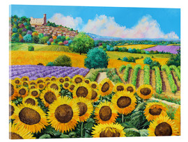 Acrylic print  Vineyards and sunflowers in Provence - Jean-Marc Janiaczyk