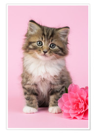 Premium poster Kitten with flower