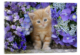 Acrylic glass  Ginger cat in flowers - Greg Cuddiford