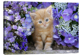 Canvas  Ginger cat in flowers - Greg Cuddiford