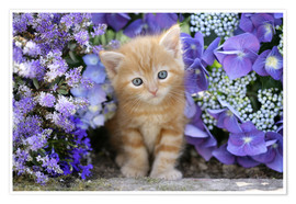 Poster  Ginger cat in flowers - Greg Cuddiford