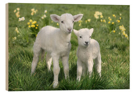 Wood print  Easter lambs - Greg Cuddiford