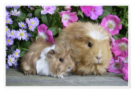 Poster Two guinea pigs