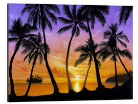Aluminium print  Palm beach sundown - Andrew Farley