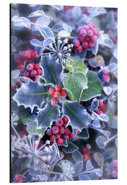 Alu-Dibond  Holly with hoarfrost - Simon Kayne