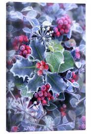Canvas print  Holly with hoarfrost - Simon Kayne