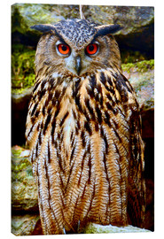 Canvas print  northern eagle owl - GUGIGEI
