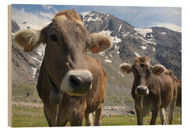 Wood print  Alpine cows in the mountains - Michele Molinari