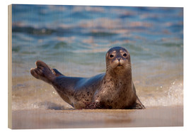 Wood print  Seal on the beach of San Diego - Christopher Talbot Frank