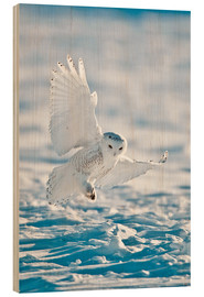 Wood print  Snowy owl on landing - Bernie Friel
