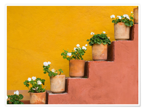 Premium poster Flowerpots on a staircase