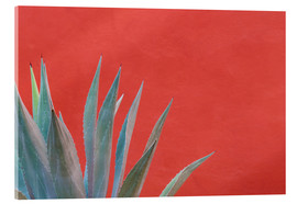 Acrylic print  Agave in front of red wall - Don Paulson