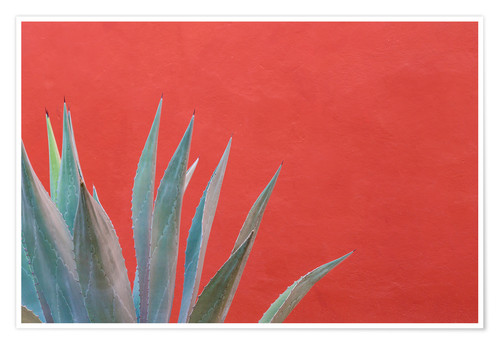 Poster Agave plant next to colorful wall