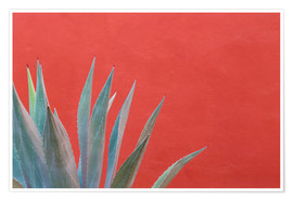 Don Paulson - Agave plant next to colorful wall